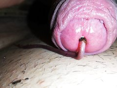 worm play - video 3