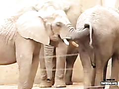 Elephant Snack Attack