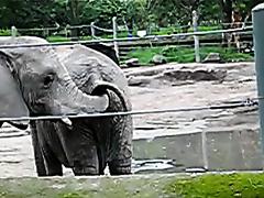 Elephant Snack Attack 2!