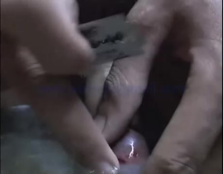 Cutting Of Cock