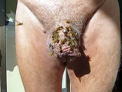 Bees buzz all over his funky looking cock