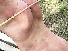 whipping eleczaun