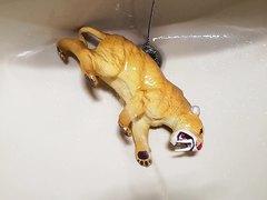 Sabertooth gets a golden shower