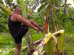 Crushing banana trees