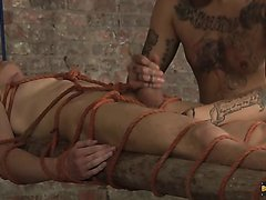Tied, waxed, milked, tortured