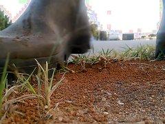 Crush ants