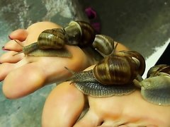 Snail Foot Tickling - video 2